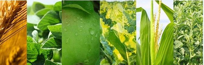 KMGM Agronomy Blog Crops