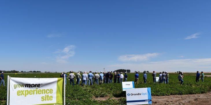 growmore-rupert-potato-field-14