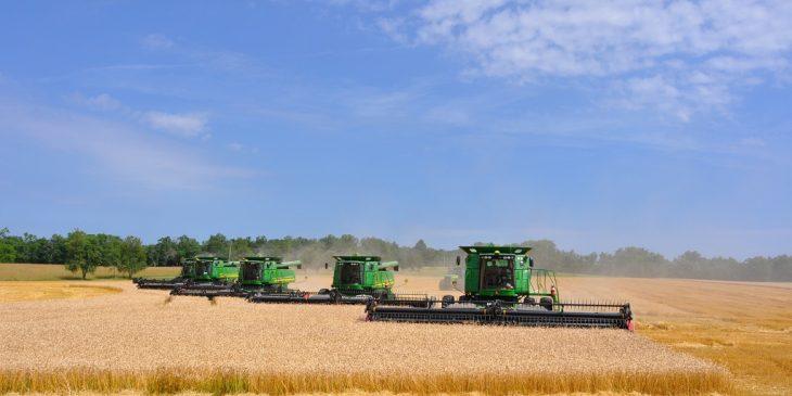 wheat32