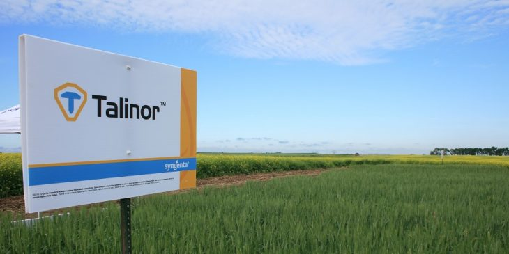 Agronomic image of Talinor herbicide in cereals