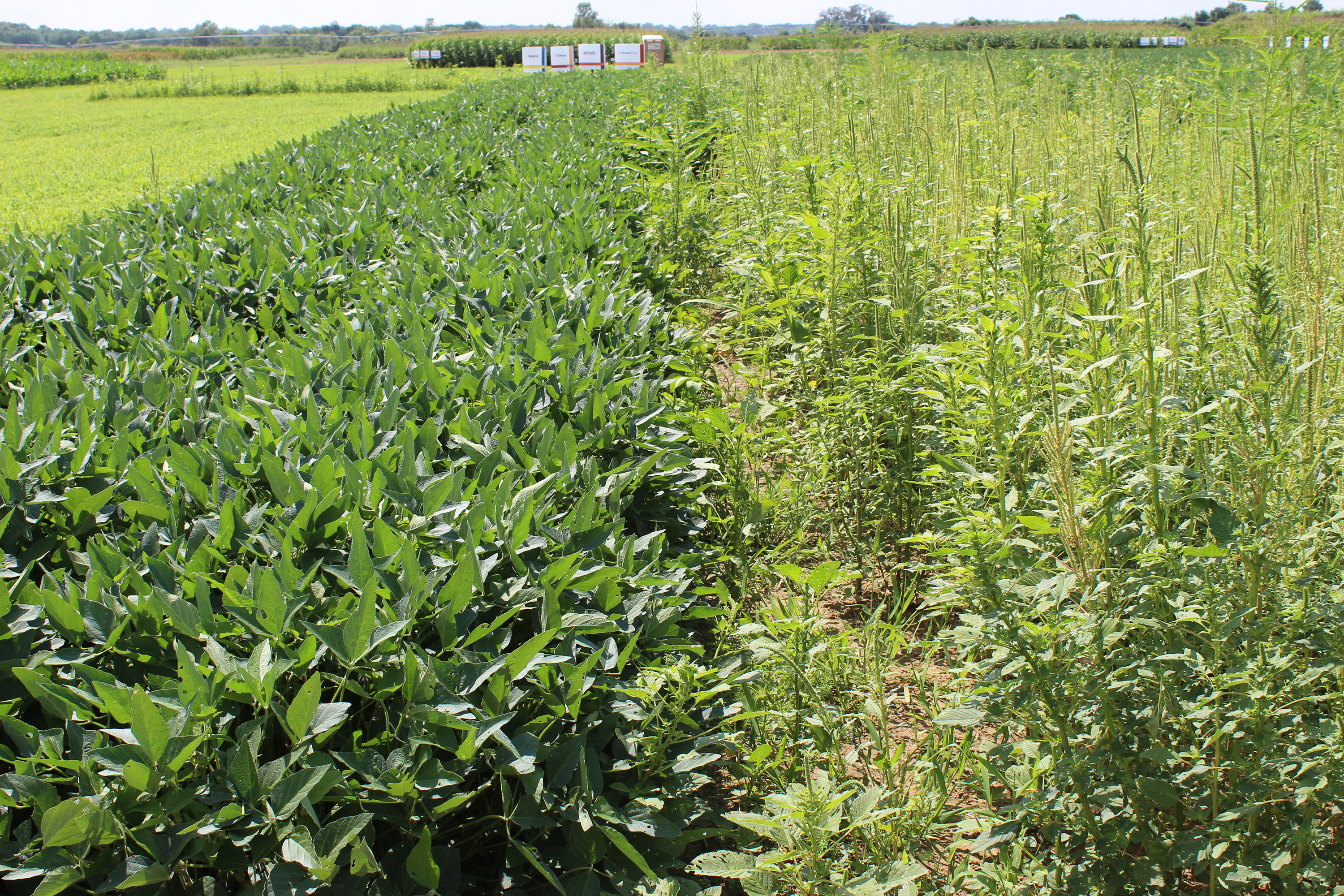 An agronomic image showing weed management.