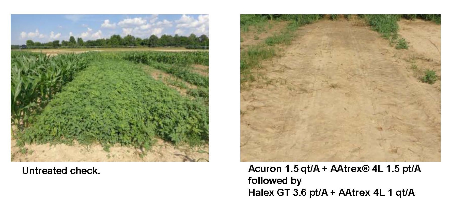 An agronomic chart showing fields with different weed control options and the possible yield loss from weeds.