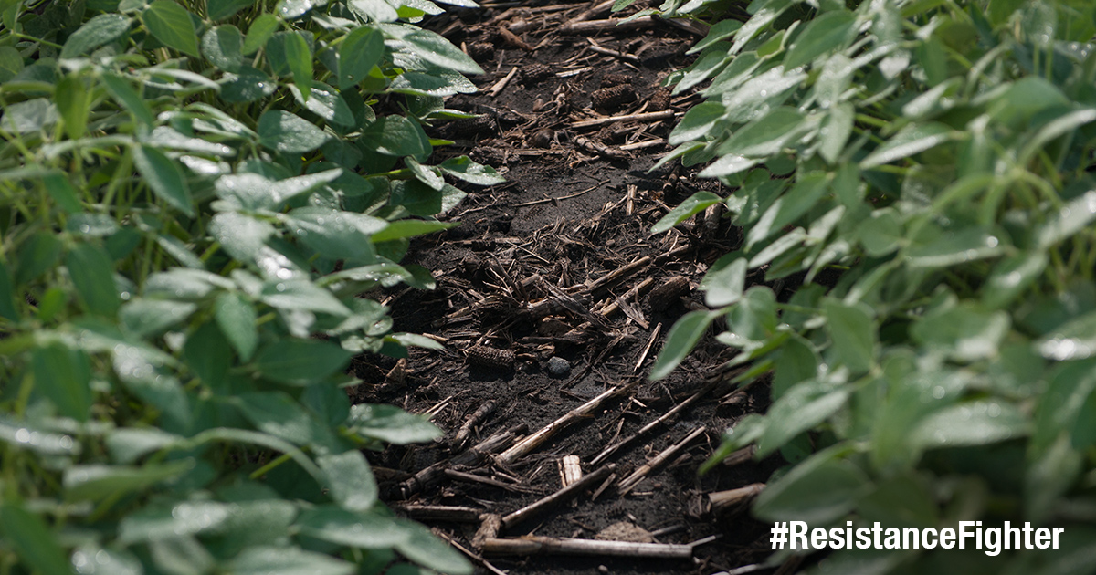 "This agronomic photo shows a close-up of weeds with the hashtag, ""ResistanceFighter."""