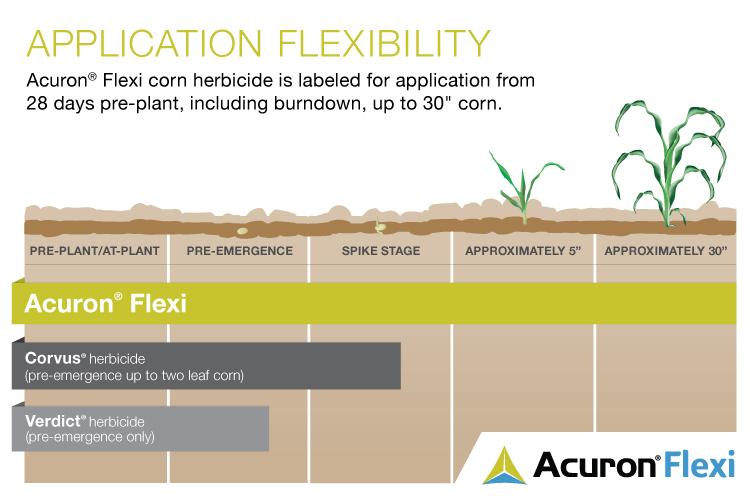 This agronomic photo shoes the comparison between Acuron Flex corn herbicide, Corvus, and Verdict herbicides on corn.