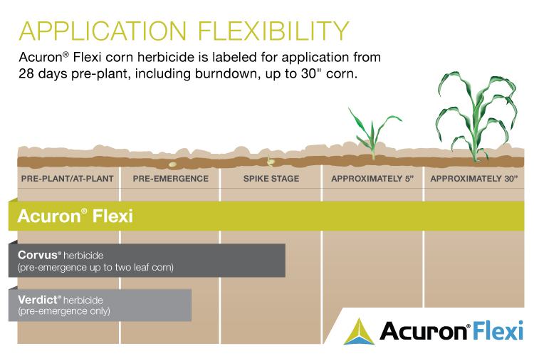 This agronomic photo shoes the comparison between Acuron Flex corn herbicide, Corvus, and Verdict herbicides on corn.