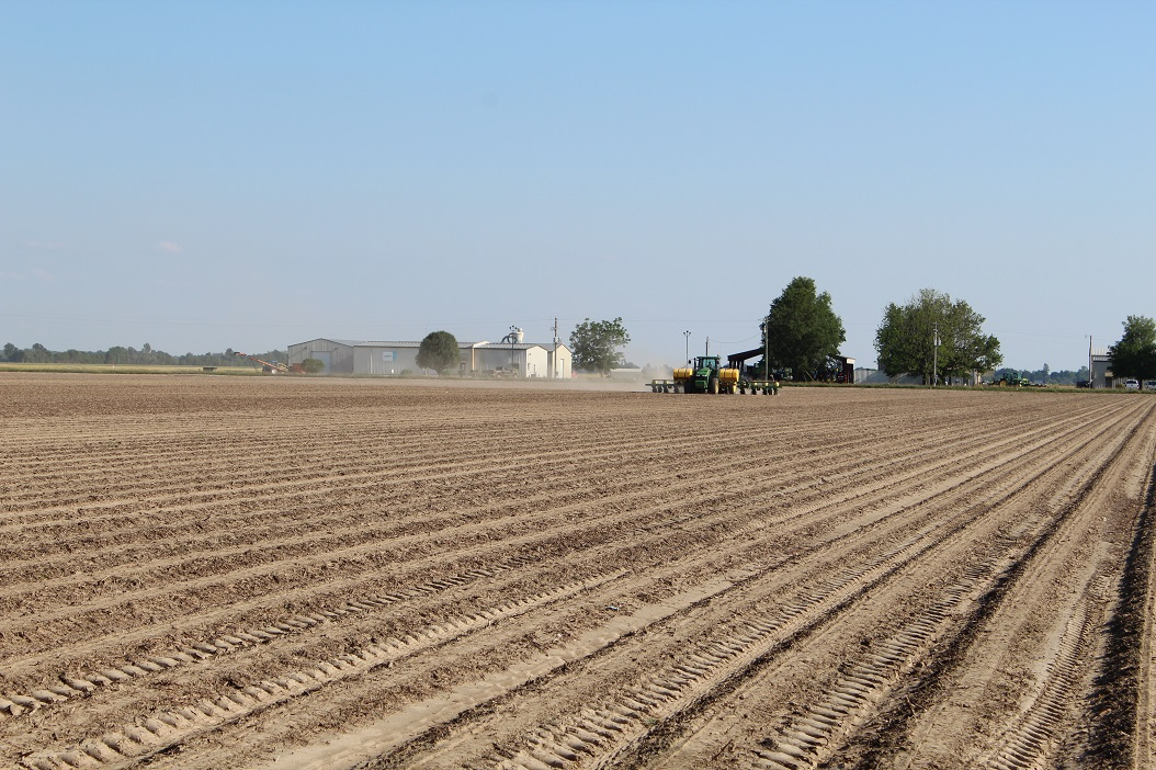 This agronomic photo shows a cotton seed care demonstration planting in Bay, Arkansas.