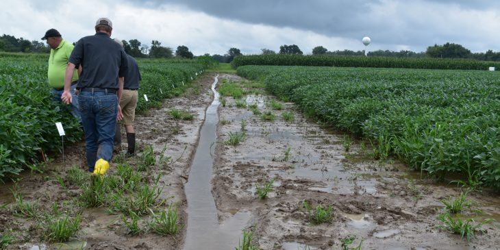 This agronomic photo shows growers assessing wet conditions in Southern Illinois soybean fields.