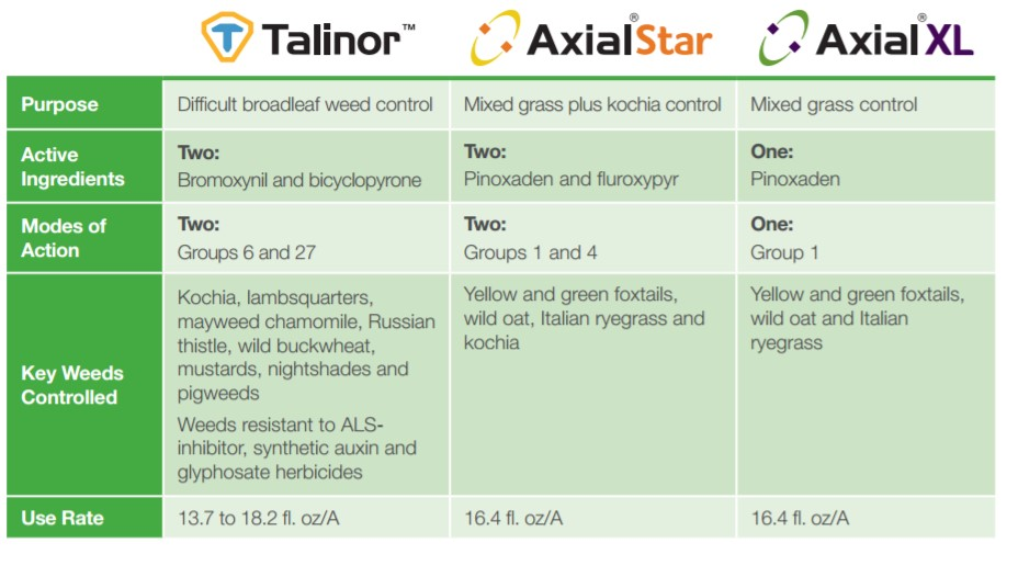 This agronomic blog image shows the comparison of Talinor, Axial Star, and Axial XL.
