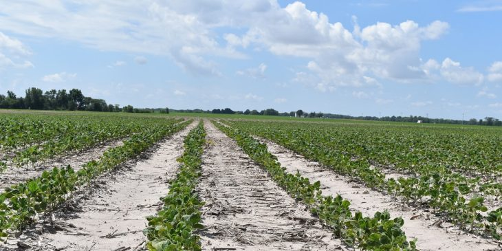 This agronomic image shows soybeans treated with CruiserMaxx Vibrance.
