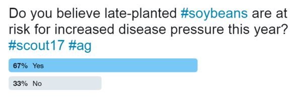 This poll shows respondents believe late-planted soybeans are at a risk from disease.