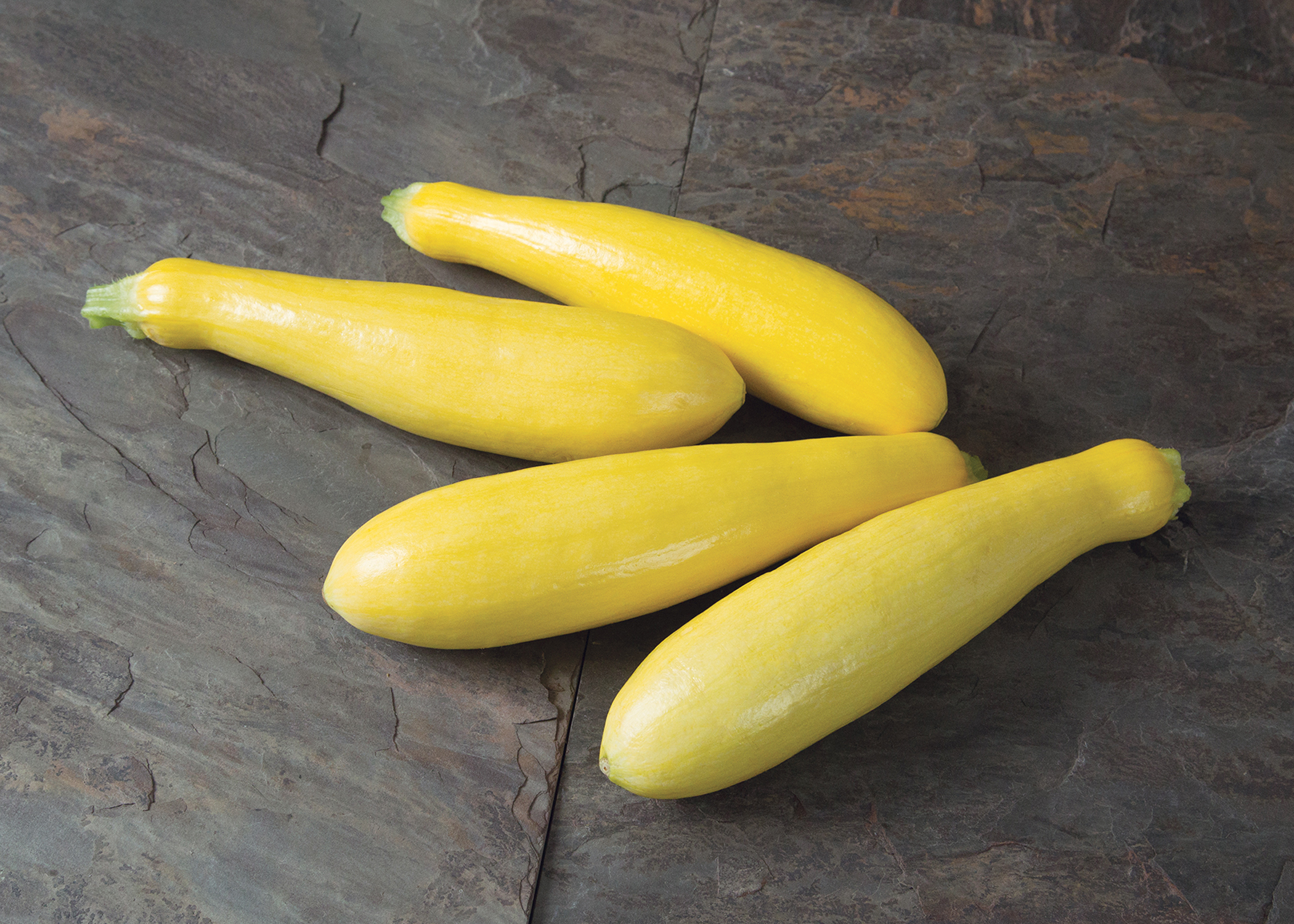 This agronomic image shows the squash variety called Grandprize.