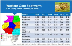 This chart shows the increase of corn rootworm beetles throughout corn fields in Illinois.
