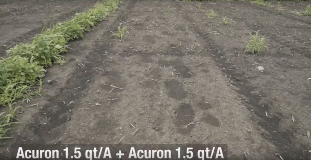 This agronomic image shows weed control with Acuron followed by Acuron.