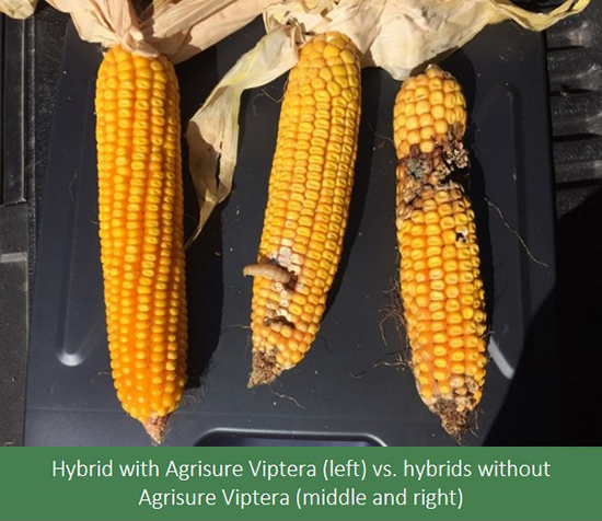 This agronomic image compares the success of hybrids with Agrisure Viptera against those without.